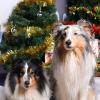 ОФСОО «ВСКО» поздравляет Вас с наступающим Новым годом!